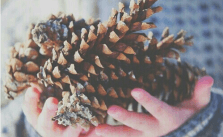 The Most Amazing Pine Cone Crafts For Christmas