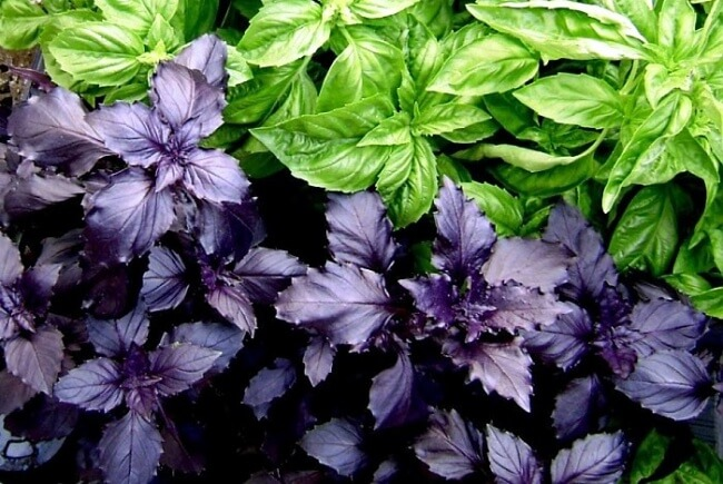 12 Awesome Vegetables That Are Perfect For Your Indoor Garden