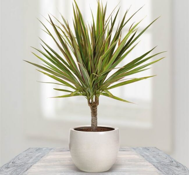 Best indoor plants that can survive even the darkest corner