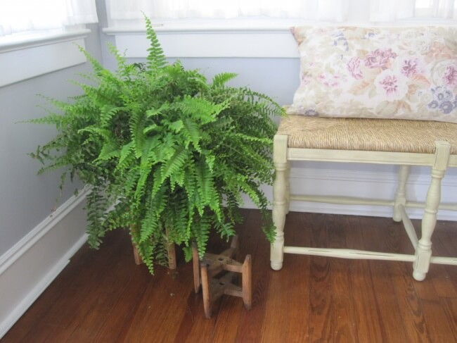 Best indoor plants that can survive even the darkest corner