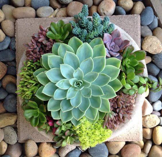 The Best Undemanding Outdoor and Indoor Plants for Busy People, succulent