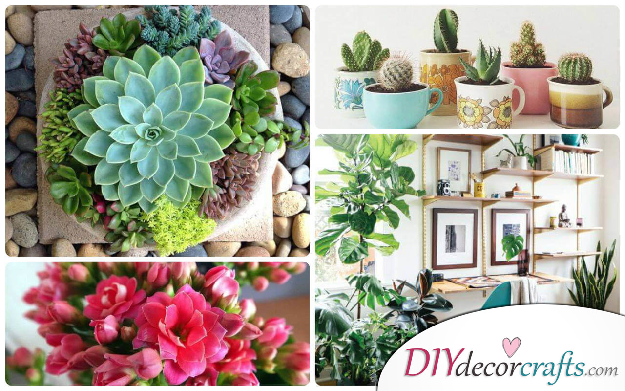 The Best Undemanding Outdoor and Indoor Plants for Busy People