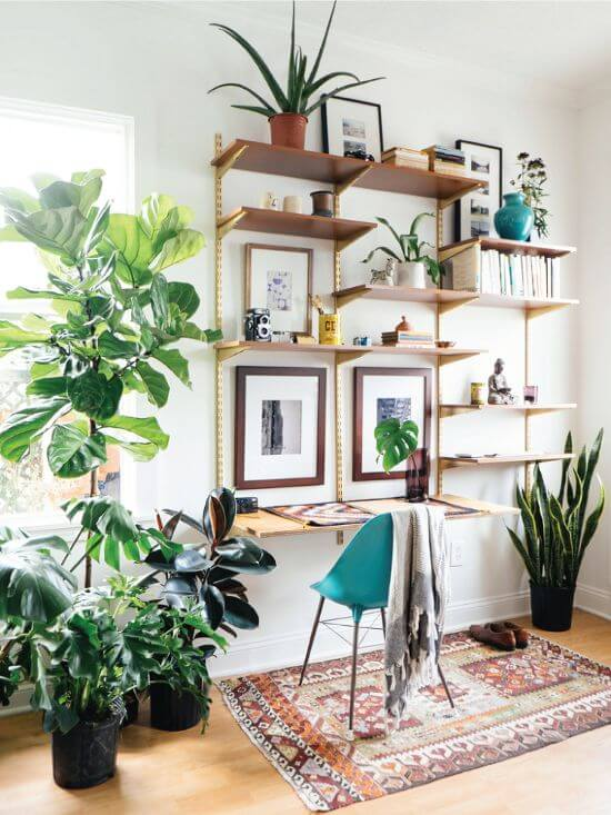 The Best Undemanding Outdoor and Indoor Plants for Busy People, ficus