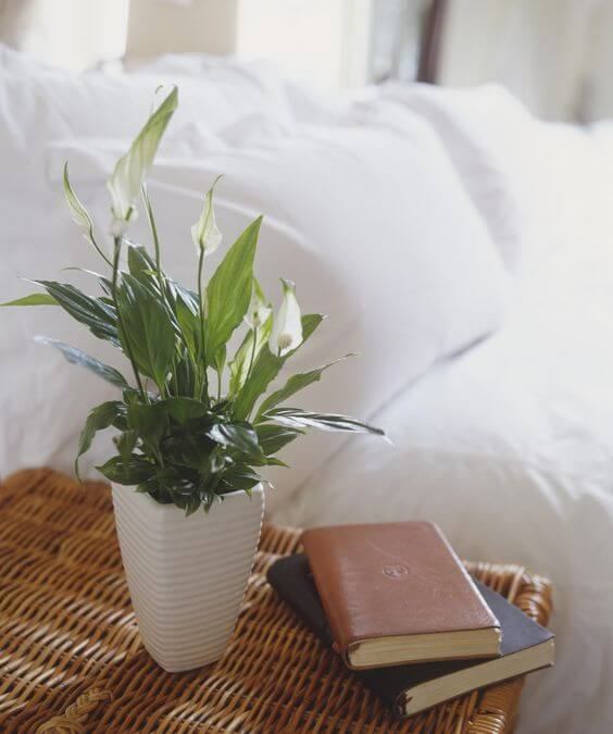 The Best Undemanding Outdoor and Indoor Plants for Busy People, Spathiphyllum