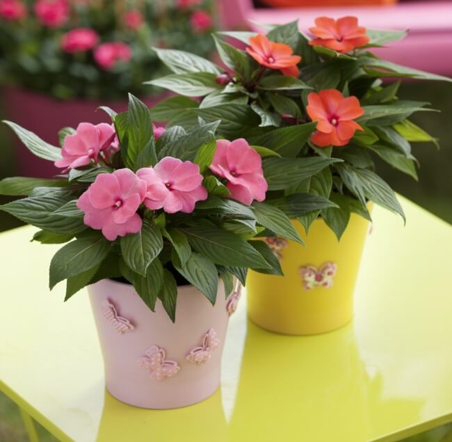 The Best Undemanding Outdoor and Indoor Plants for Busy People, Impatiens