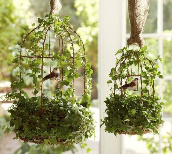 The Best Undemanding Outdoor and Indoor Plants for Busy People, ivy
