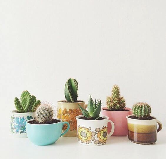 The Best Undemanding Outdoor and Indoor Plants for Busy People, cacti