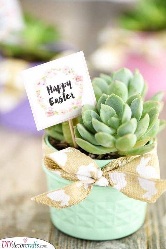 Adorable Succulents - Cute Easter Gifts for Adults