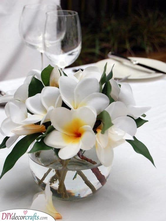 A Bowl of Frangipanis - Beauty and Elegance