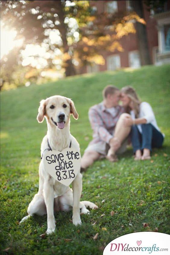 Canine Friend - Include Man's Best Friend