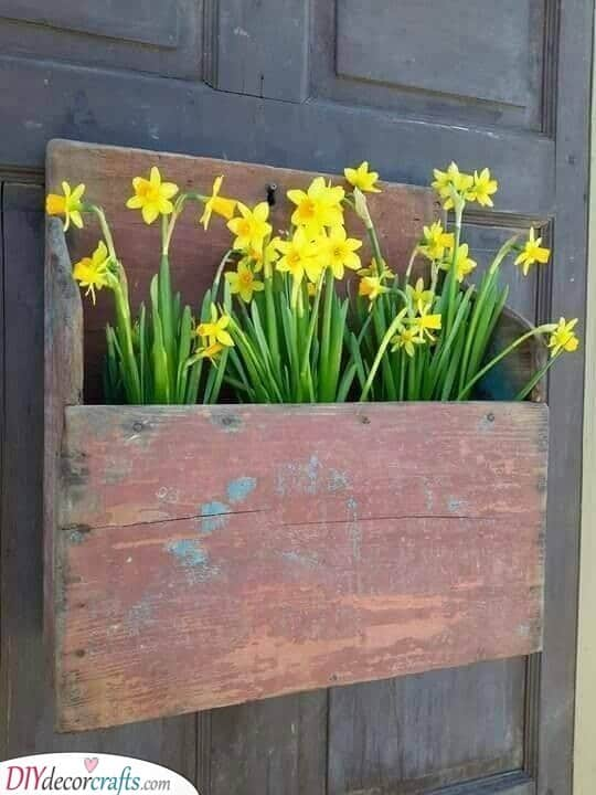 Golden Daffodils - Gorgeous Array of Flowers
