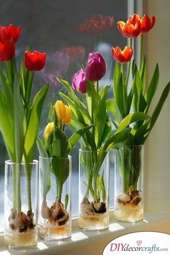 Show Off the Bulbs - Ideas for Tulip Decor