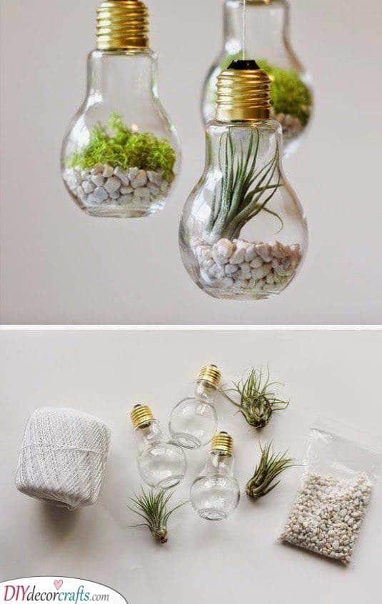 Mini Terrariums - In Light Bulbs