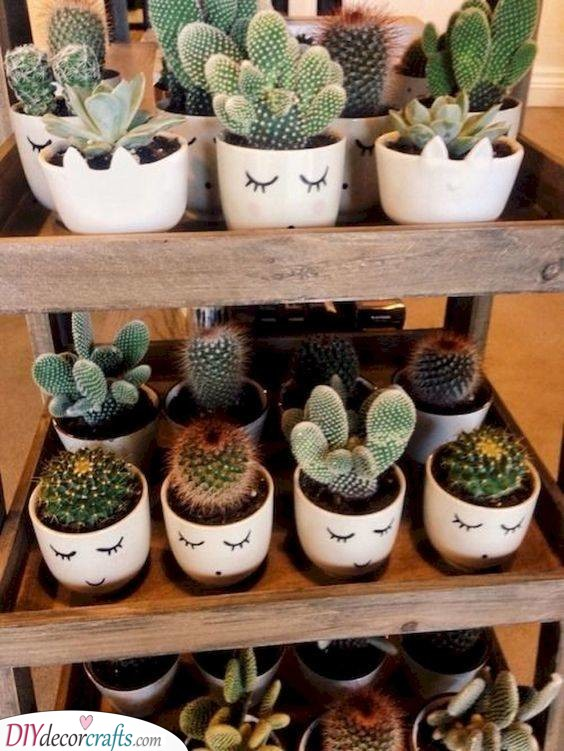 Cute Cactii - For Women Who Love Gardening