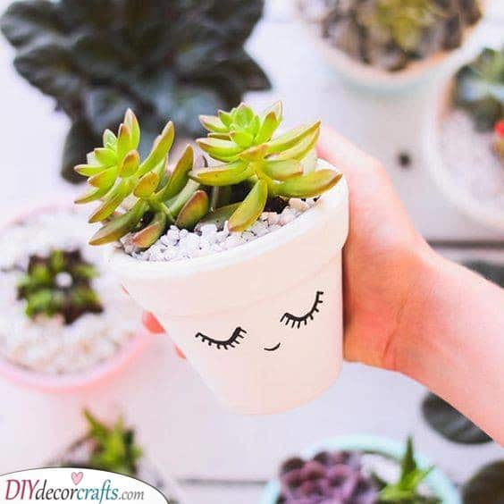 Cute Succulents - Growing Plants