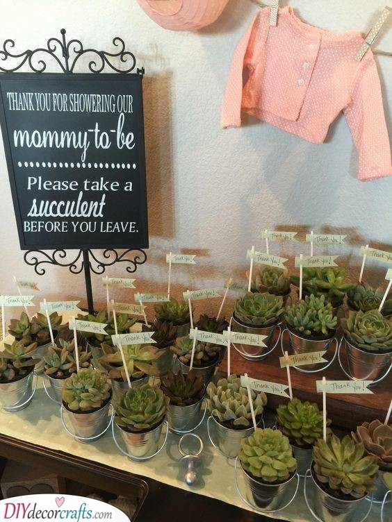 Cute Succulents - Perfect Thank-You Gifts
