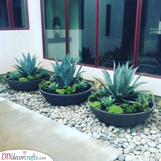 Pots of Succulents - Elegance and Sophistication