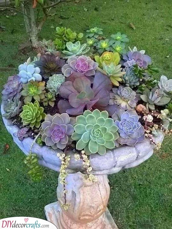 Succulents and Antiques - A Stylish Combination