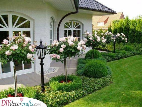 Romantic Roses - Front Yard Landscaping Ideas on a Budget