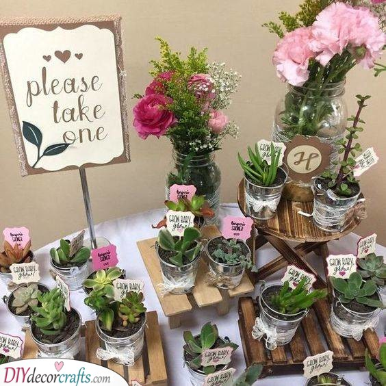 Growing With Love - Cute Succulents and Plants
