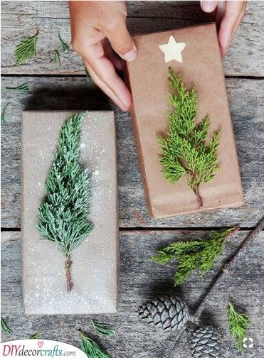 Elements of Nature - Fir Branches