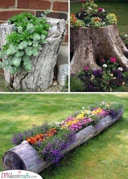 A Bit of Nature - Tree Stumps