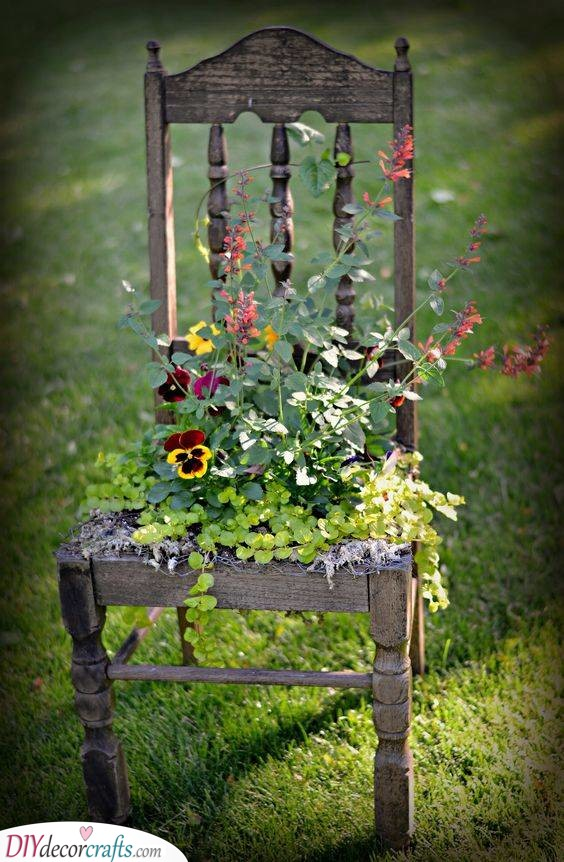 An Antique Chair - Growing Flowers in a Different Way