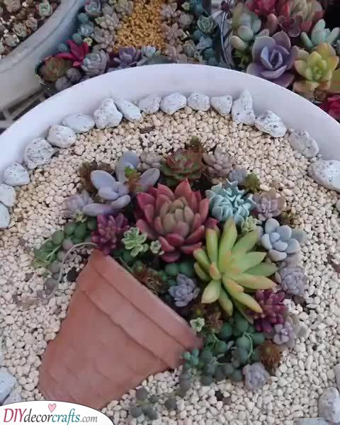 Cute Succulents - How to Plant Them