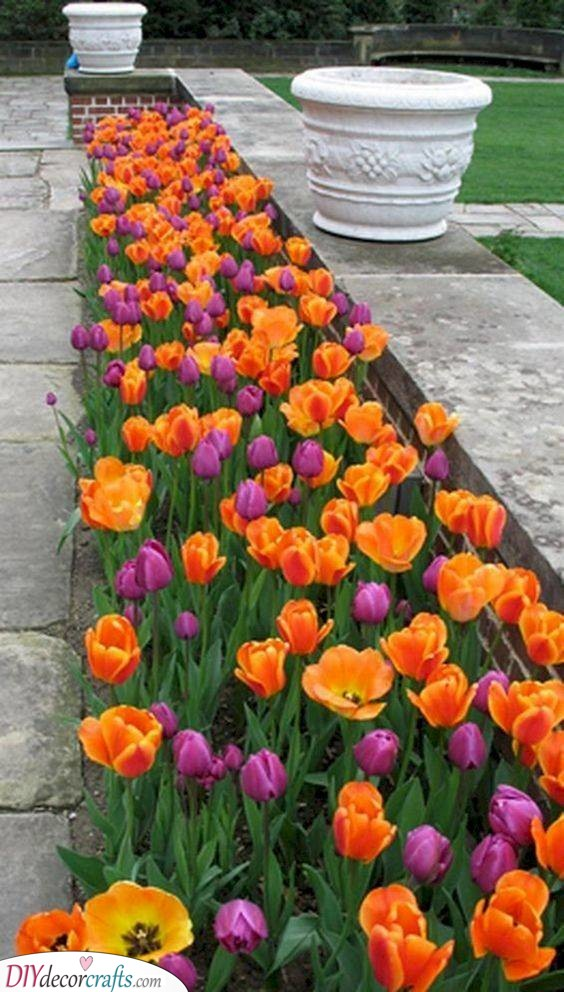 A Bed of Tulips - Simple Flower Bed Ideas