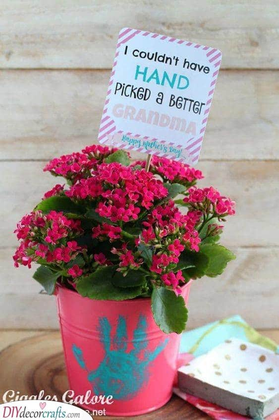 A Pot of Flowers - With a Sweet Message