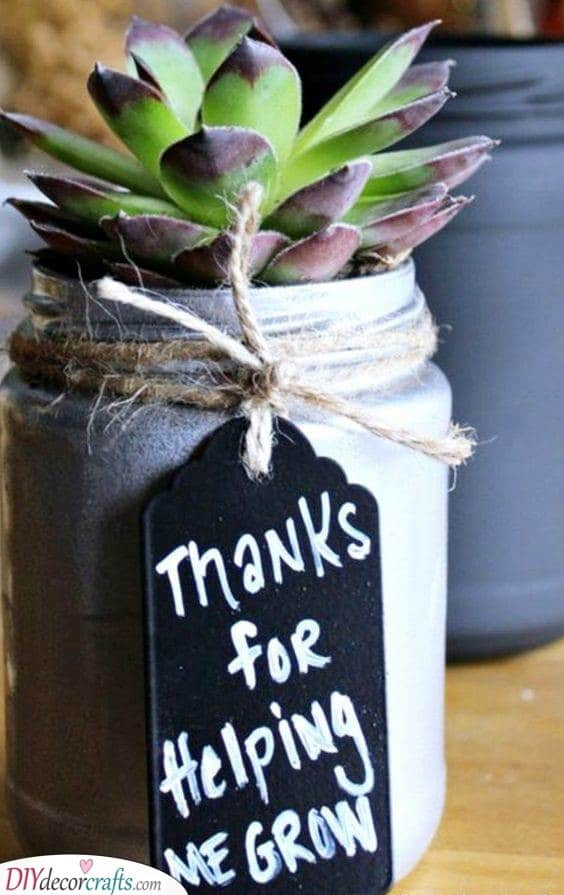 Giving Thanks - A Stunning Succulent
