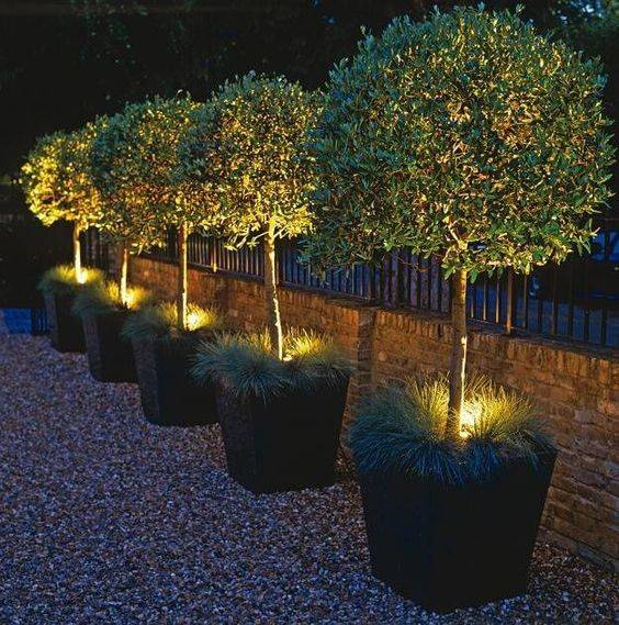 Turn Your Plants into Centrepieces - Garden Lighting Ideas