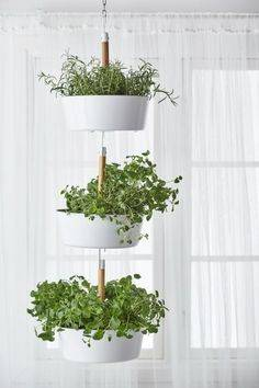 Hanging from the Ceiling - Stylish Herb Planters for Kitchen