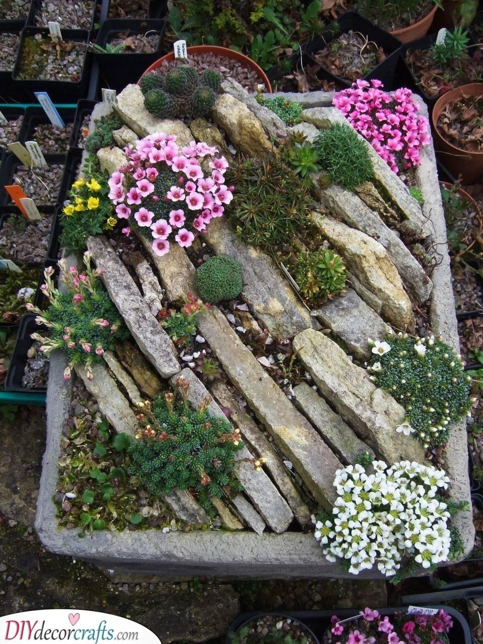 An Alpine Trough - Rock Garden Ideas
